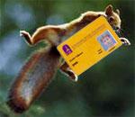 squirrel-id.jpg