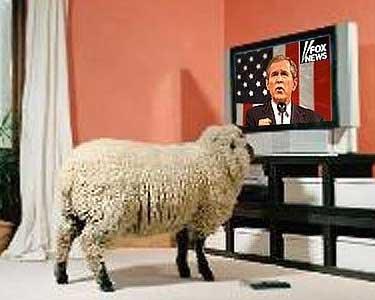 bush-sheep.jpg