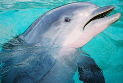 dolphin-frown.jpg