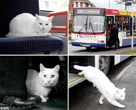 cat_public_trans.jpg
