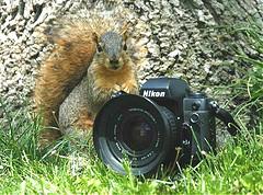 spy_squirrel.jpg
