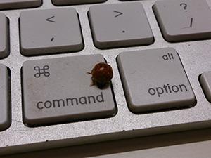 Ladybug Keyboard